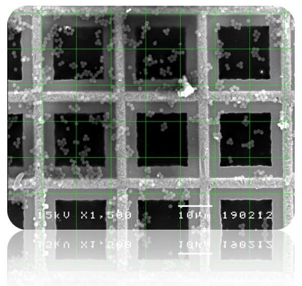 ภาพSEMดิจิตอลไฟล์+Grid
